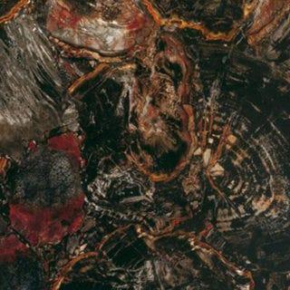 Black PetrifiedWood