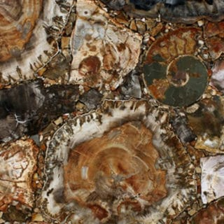 Brown Petrified Wood